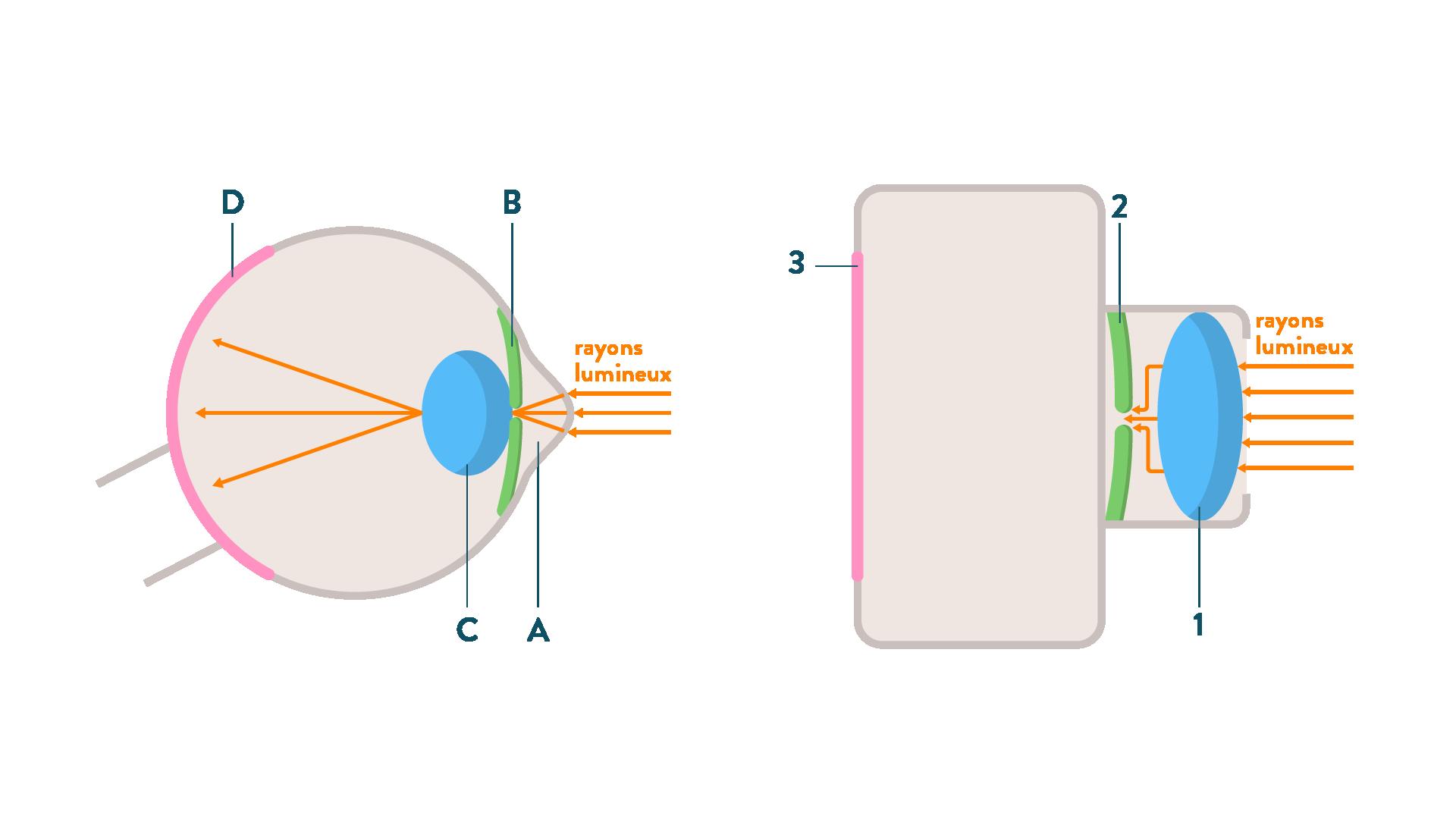 Comparaison entre l'oeil et l'apparail photographique-sciences-1ère-es-l