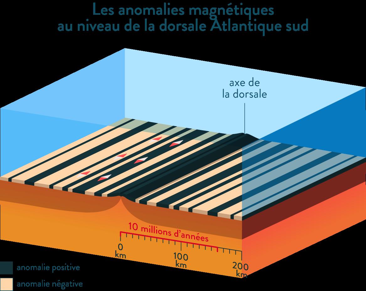 Les anomalies magnétiques dorsale atlantique sud