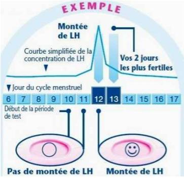 Extraits d'une notice d'utilisation d'un test de fertilité vendu en pharmacie