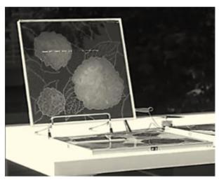"""Capture d'écran d'un reportage vidéo de l'AFP sur la cellule solaire japonaise """"hortensia"""""""