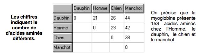 Tableau de comparaison des séquences d'acides aminés de la myoglobine chez quatre vertébrés différents