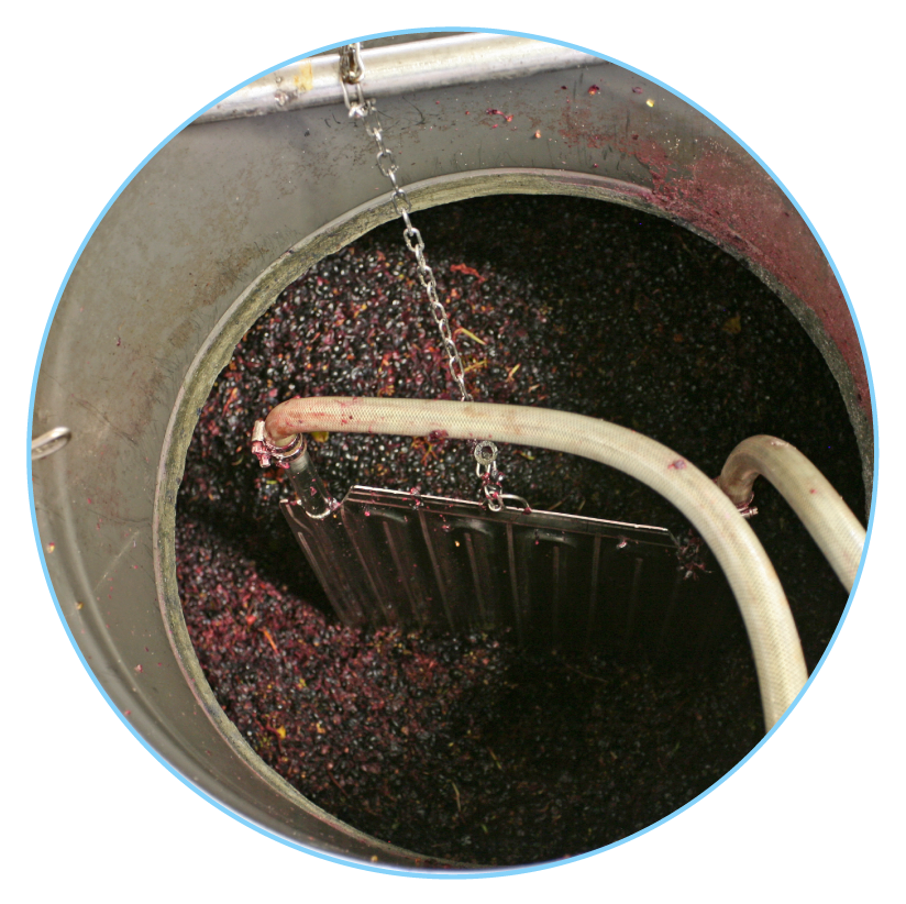Macération du raisin, production du vin 2nde