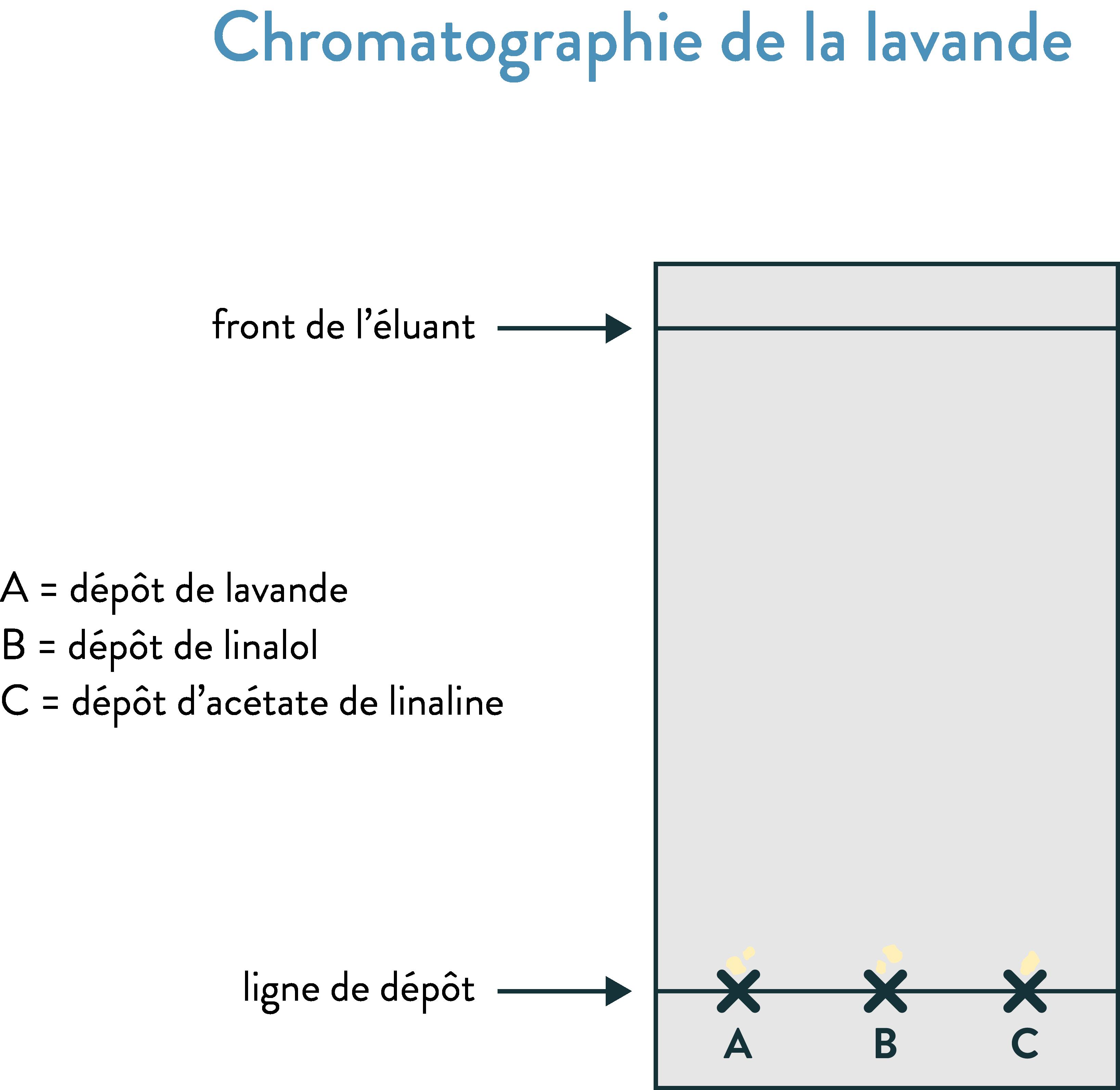 Chromatographie de la lavande