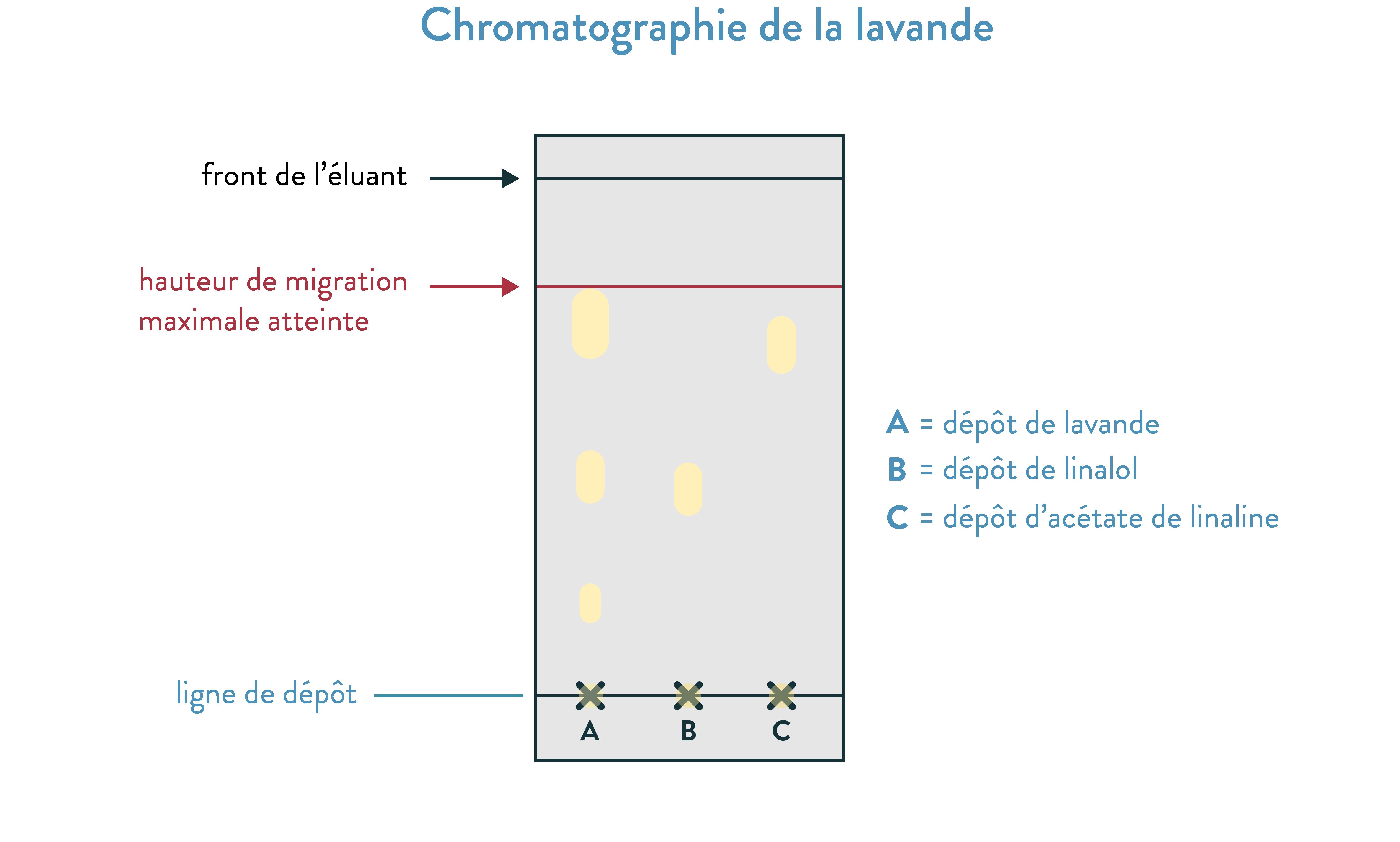 Chromatographie de la lavande 2nde