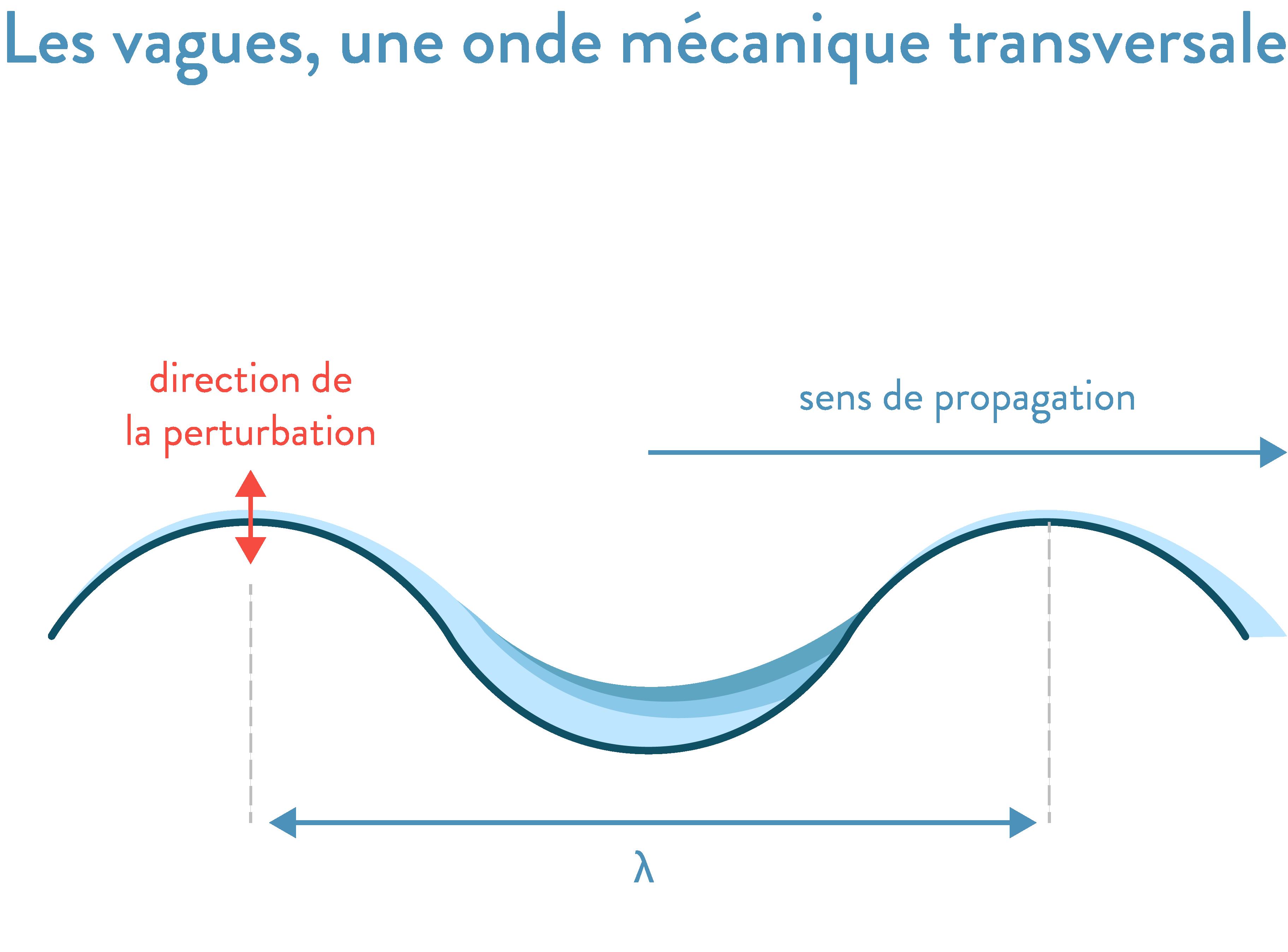 Les vagues, une onde mécanique transversale 2nde