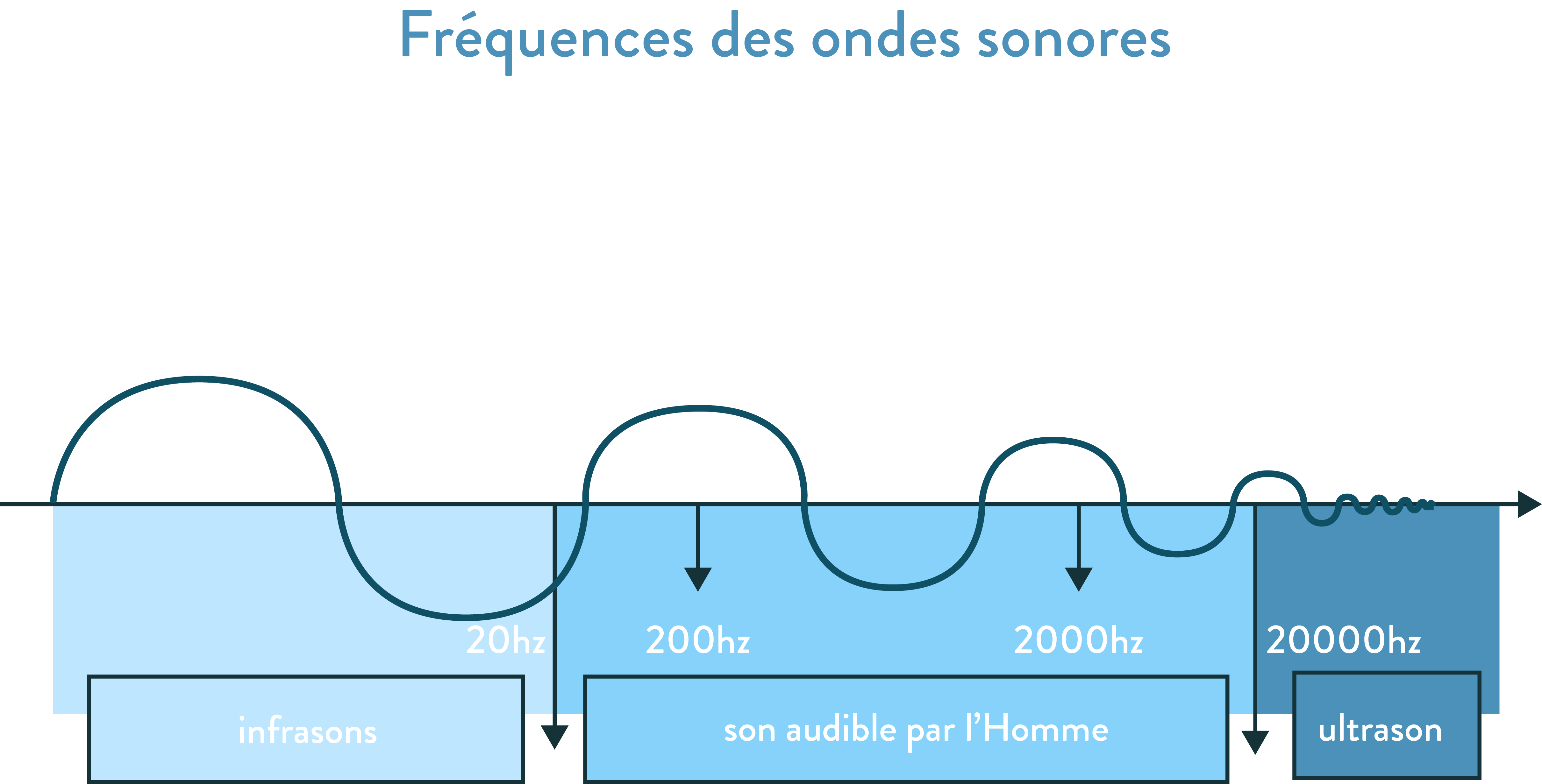 Fréquences des ondes sonores 2nde
