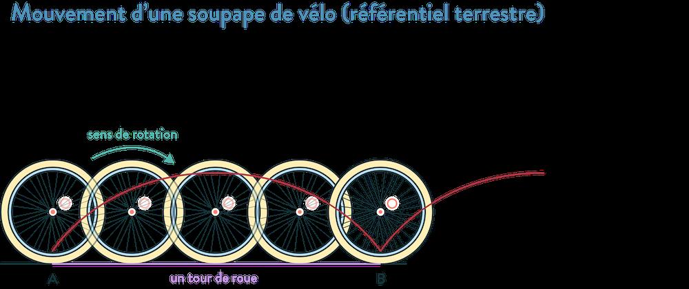 Mouvement d'une soupape de vélo (référentiel terrestre) 2nde