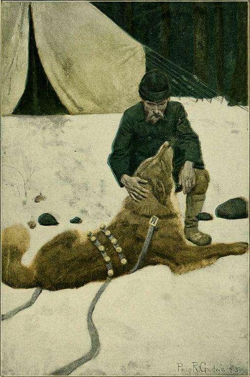 Buck, L'Appel de la forêt, 1904