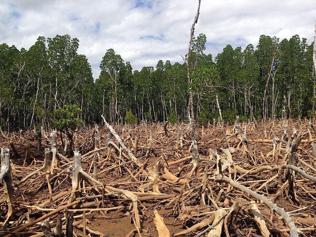 La déforestation à Madagascar géographie cinquième