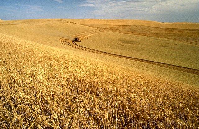 L'agriculture industrielle de céréales aux États-Unis