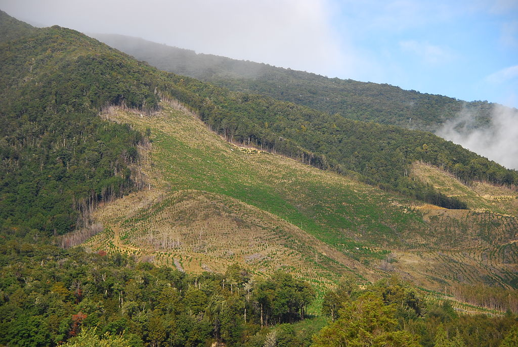 Déforestation en Nouvelle-Zélande ©Martin Wegmann