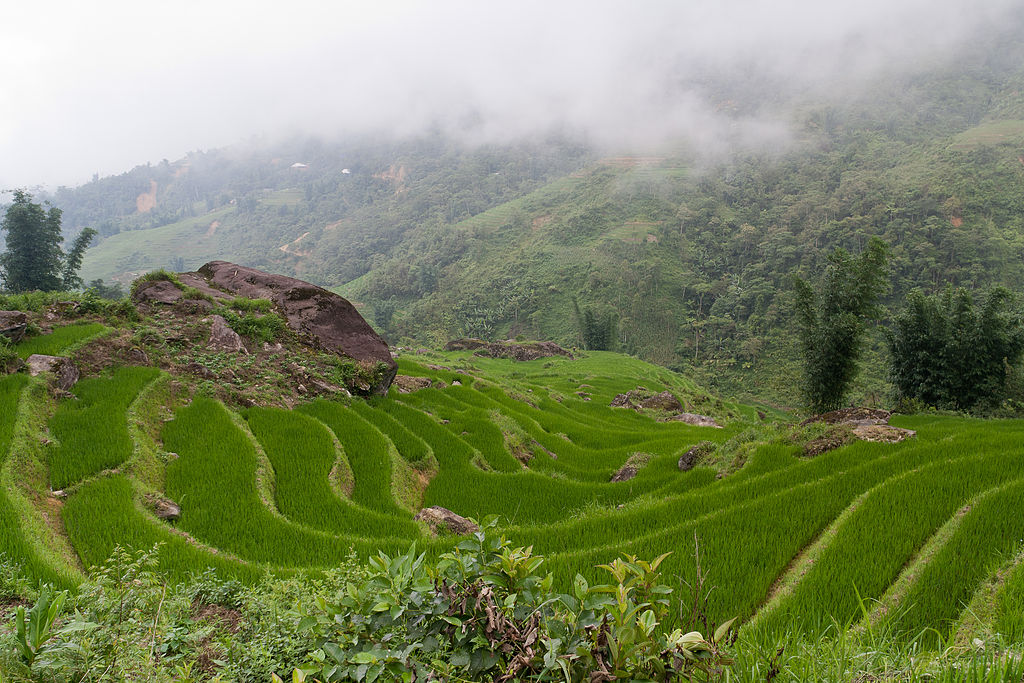 Culture du riz en terrasse dans la vallée de Sa Pa©Ekrem Canli - 2014