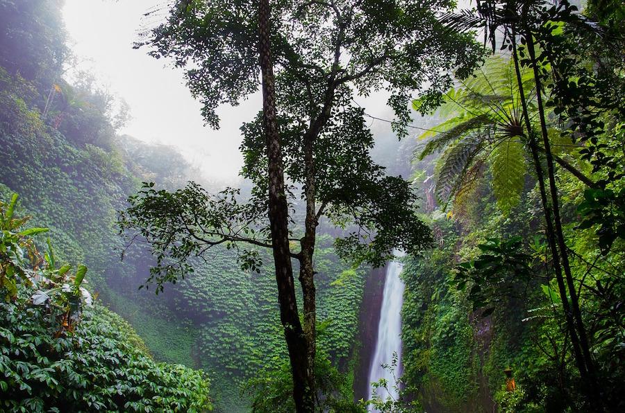 6e-geo-la forêt amazonienne