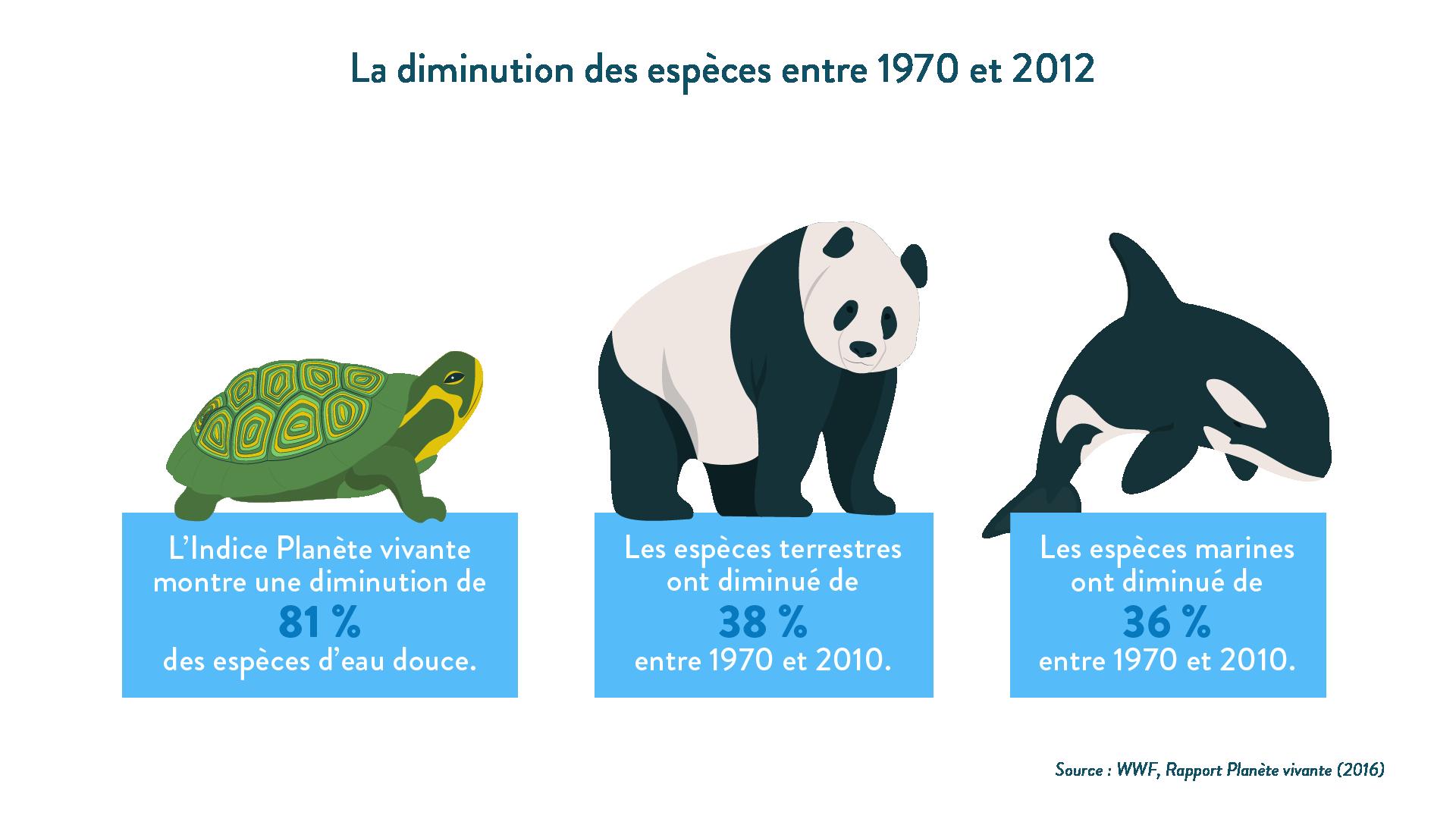 6e-géographie-SchoolMouv - La diminution des espèces entre 1970 et 2012