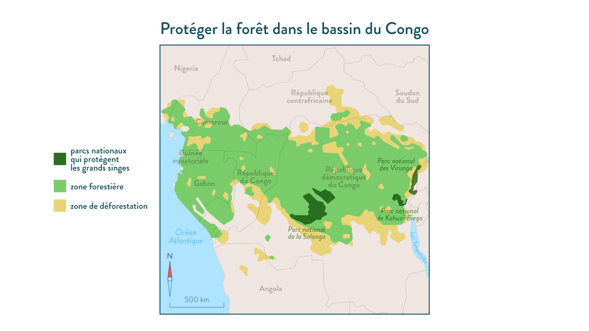 6e-géographie-SchoolMouv - Protéger la forêt dans le bassin du Congo