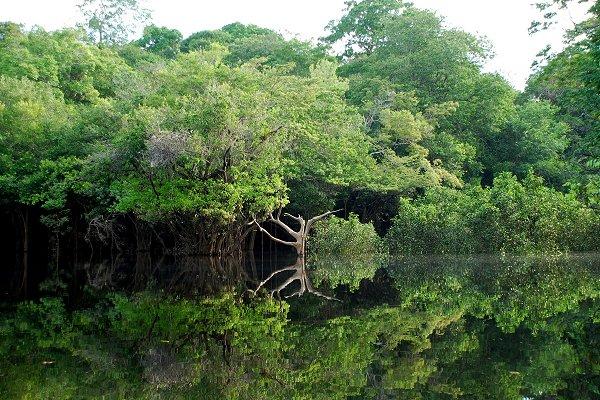 La forêt amazonienne, au Brésil. ©LecomteB