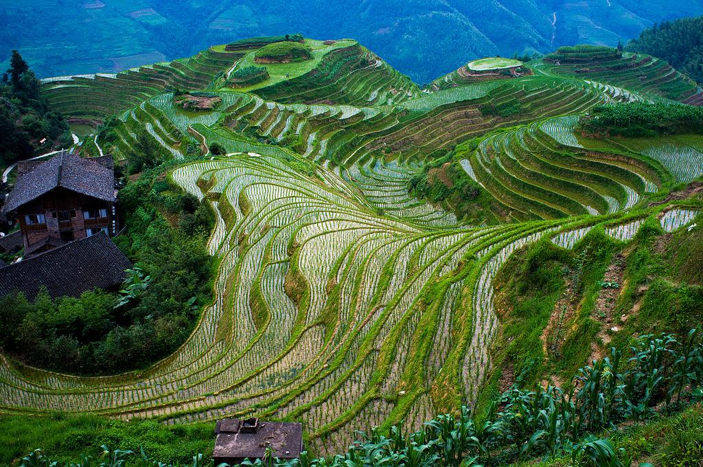 Des rizières traditionnelles, en terrasse, en Chine ©severin.stalder