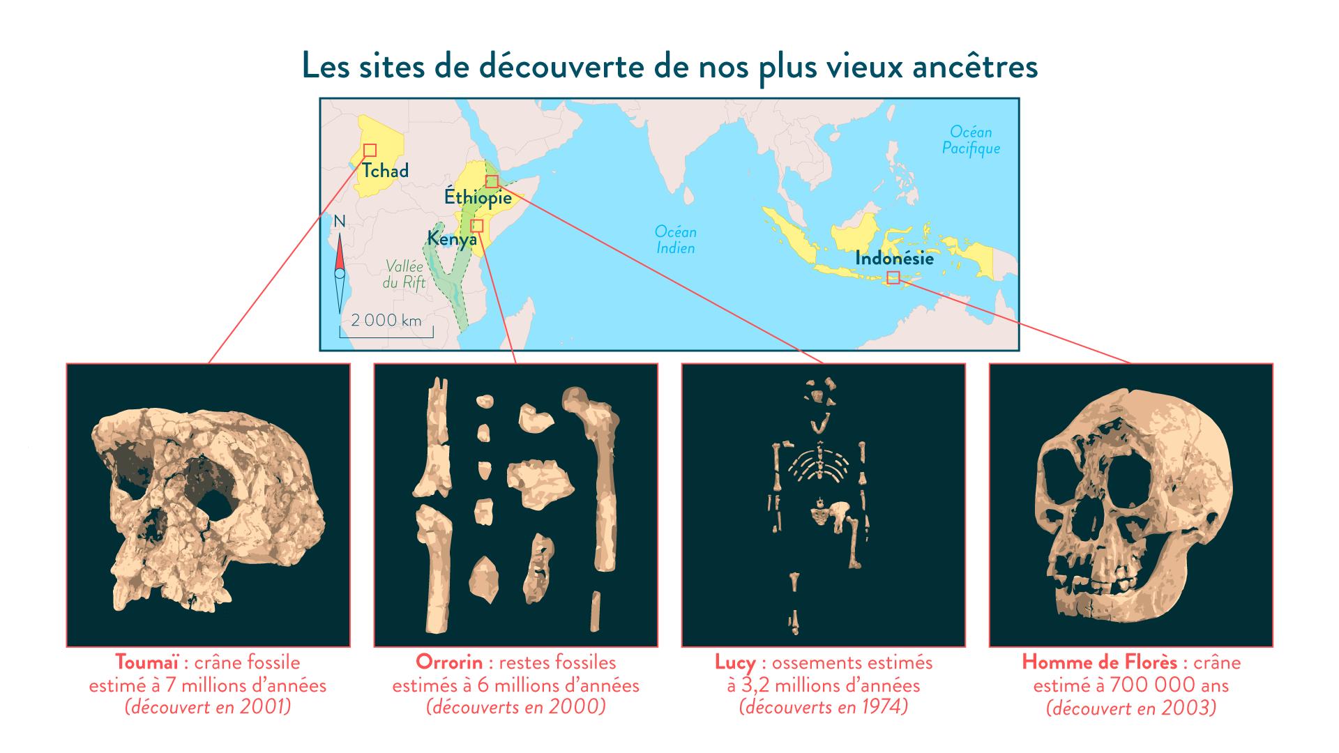 Les sites de découverte de nos plus vieux ancêtres-6e-Histoire