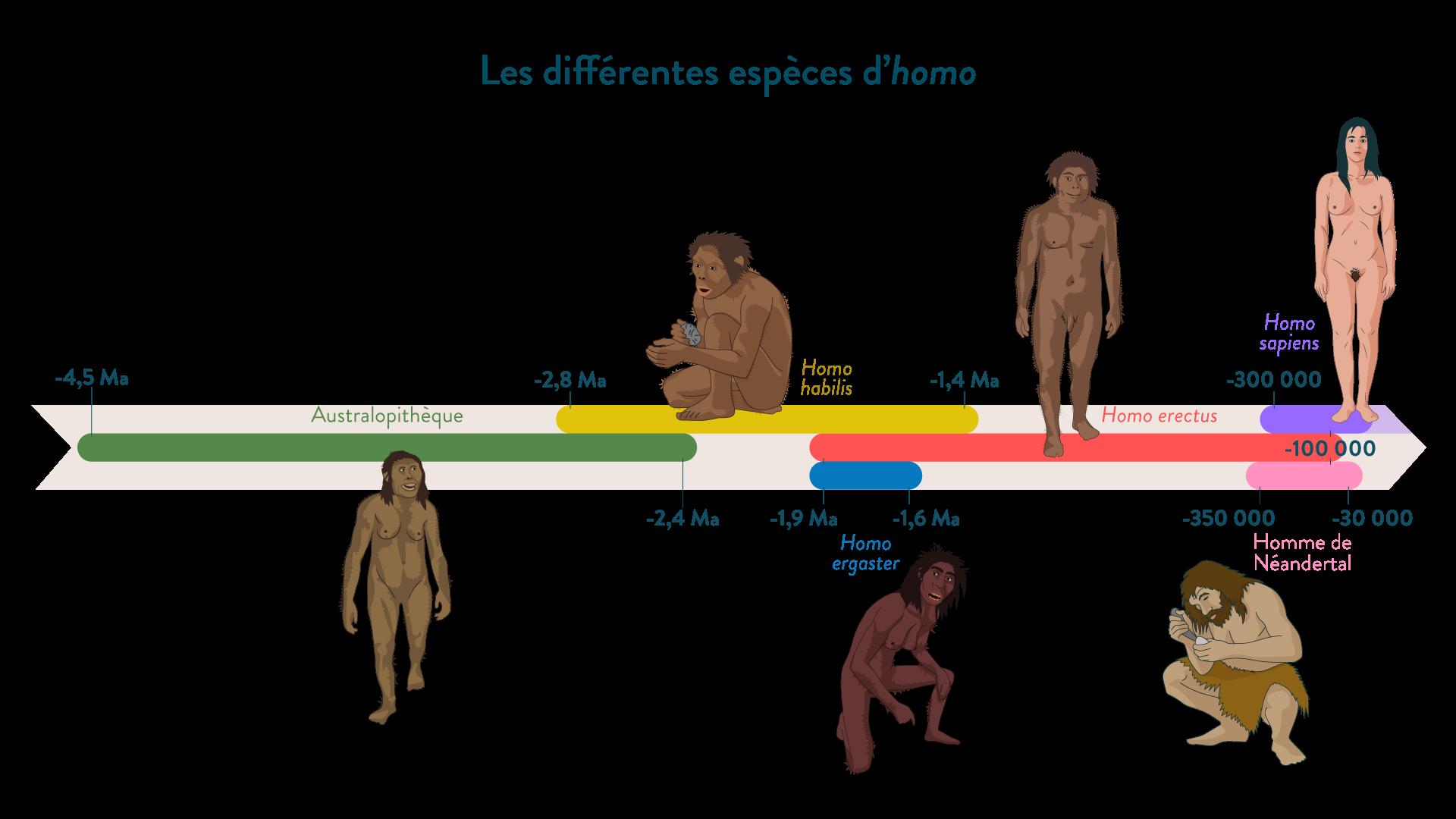 Les différentes espèces d'homo-6e-Histoire