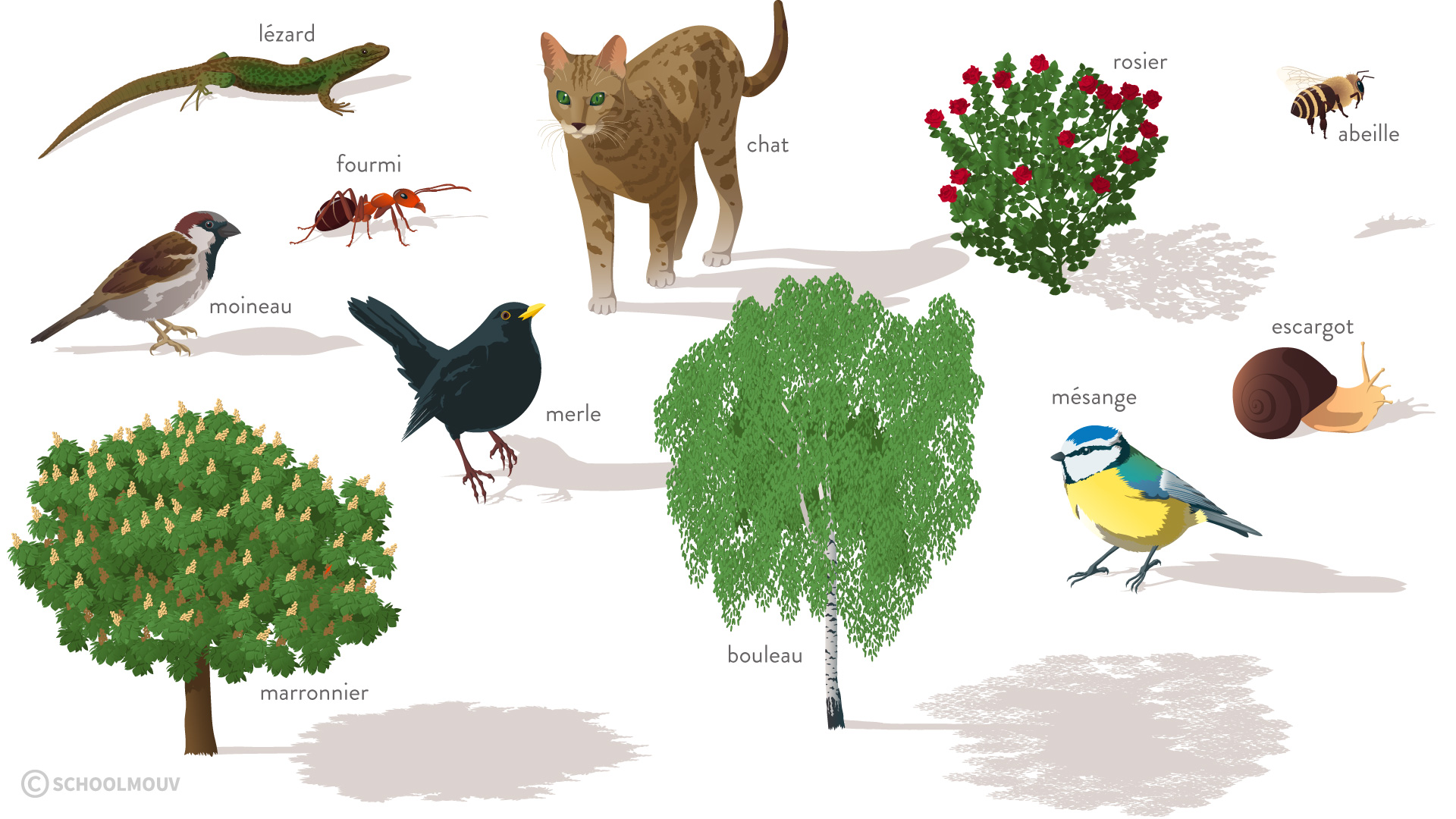 Êtres vivants observés dans un jardin public-svt-6eme-schoolmouv