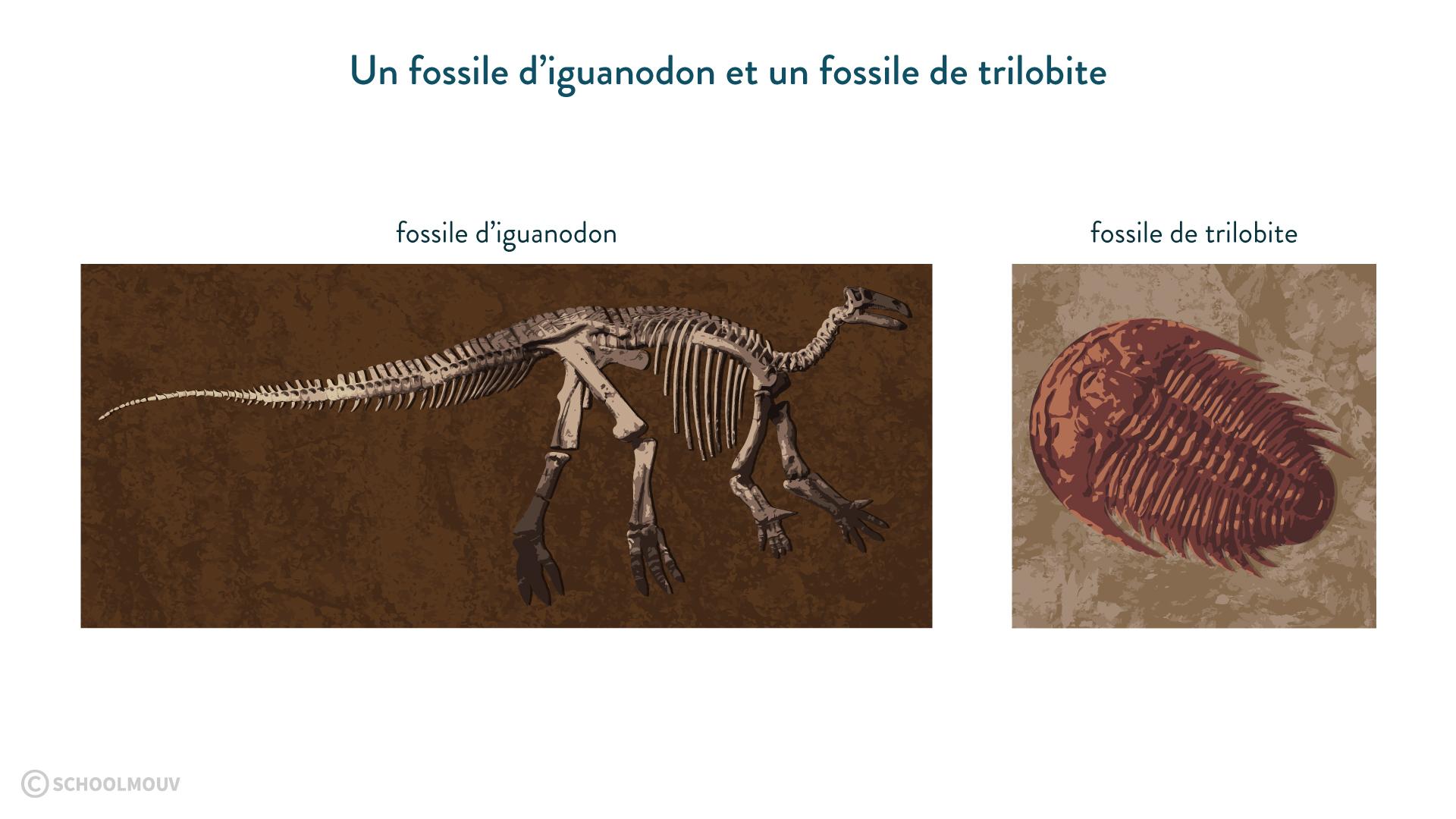 Un fossile d'iguanodon et un fossile de trilobite-svt-6eme-schoolmouv