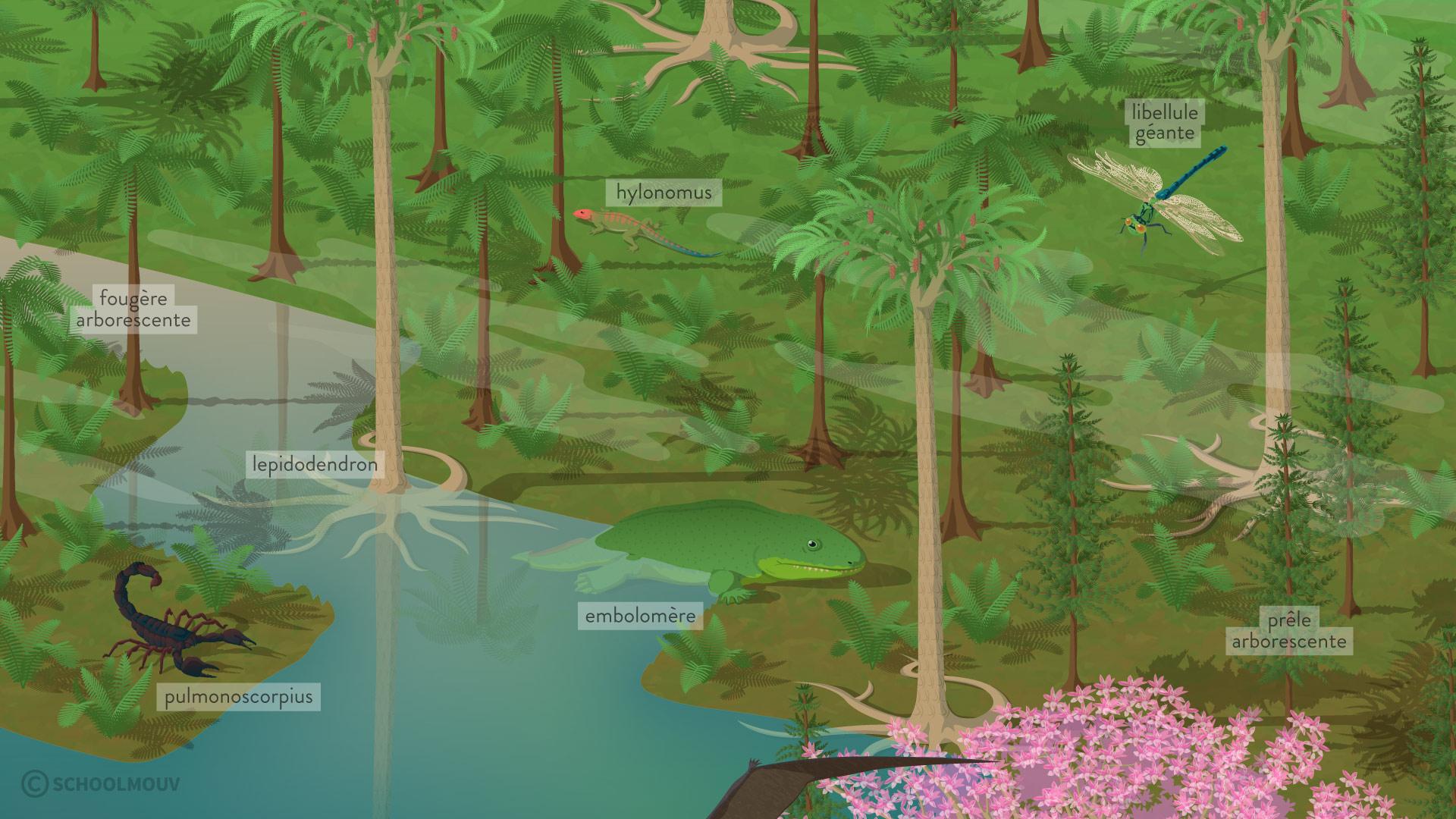 Reconstitution d'une forêt houillère du Nord de la France datée de 300 millions d'années (Carbonifère)-svt-6eme-schoolmouv