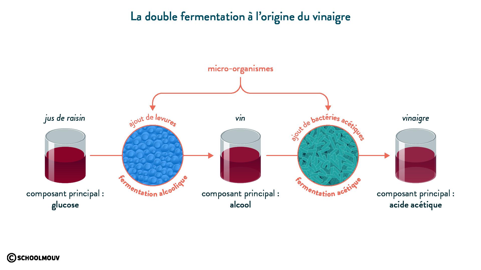 La double fermentation à l'origine du vinaigre-svt-6eme-schoolmouv
