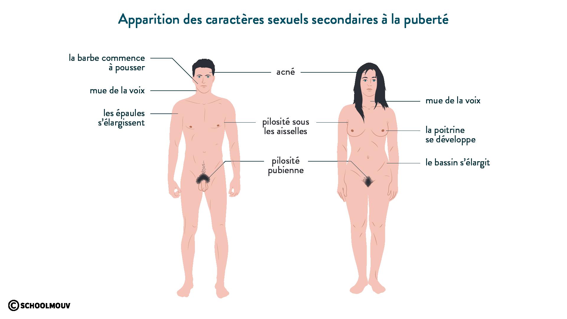 Apparition des caractères sexuels secondaires à la puberté svt 6ème schoolmouv