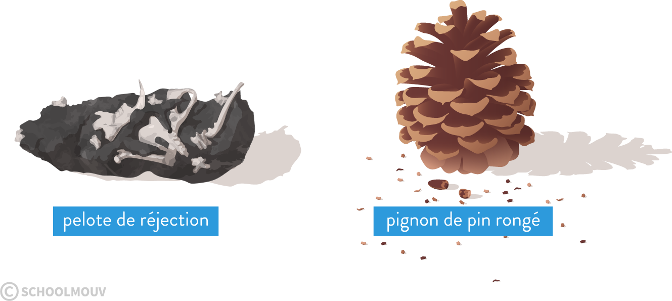 pignon pin pelote réjection