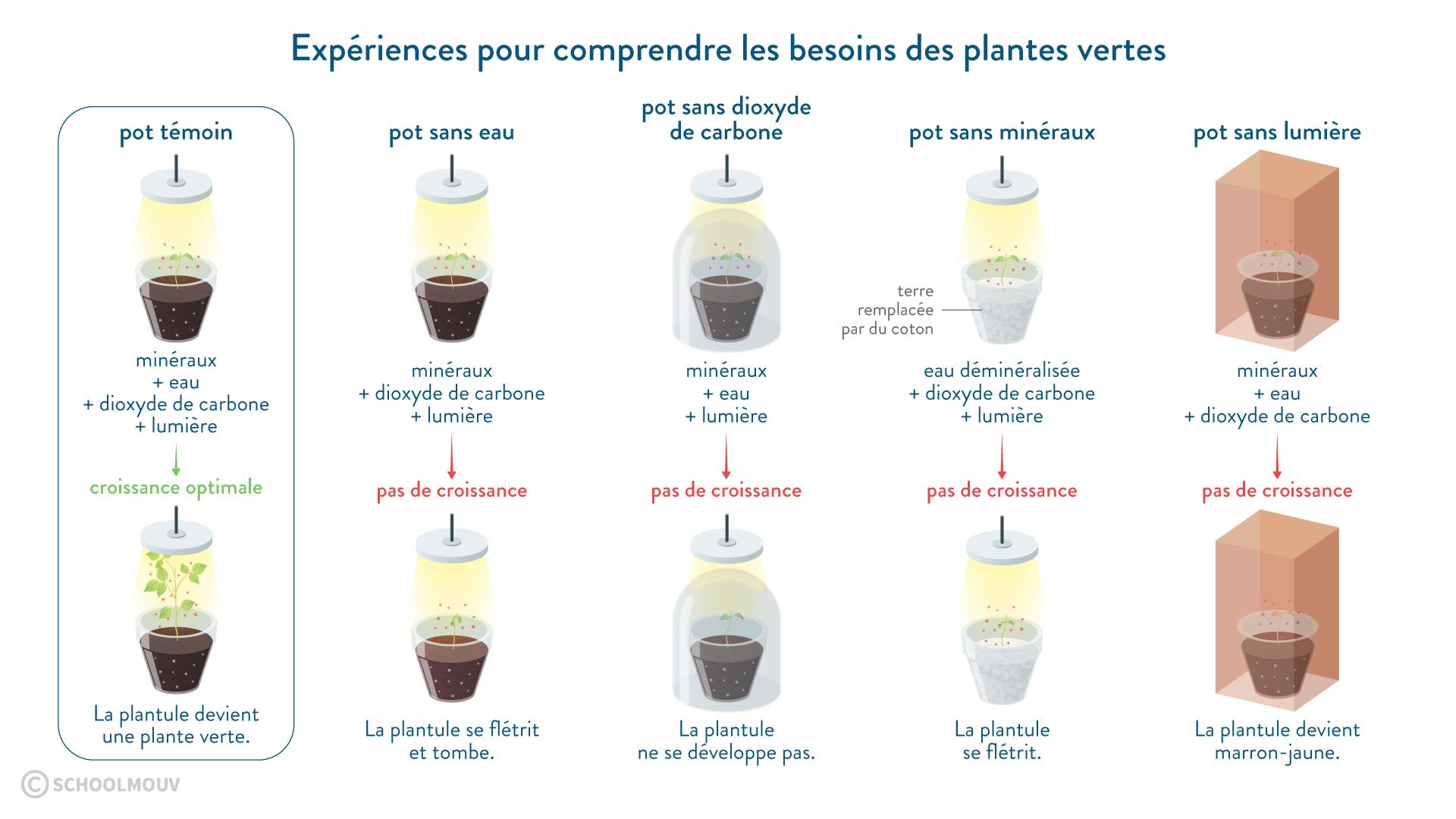 Expériences pour comprendre les besoins des plantes vertes eau dioxyde de carbone minéraux lumière témoin-svt-6eme-schoolmouv