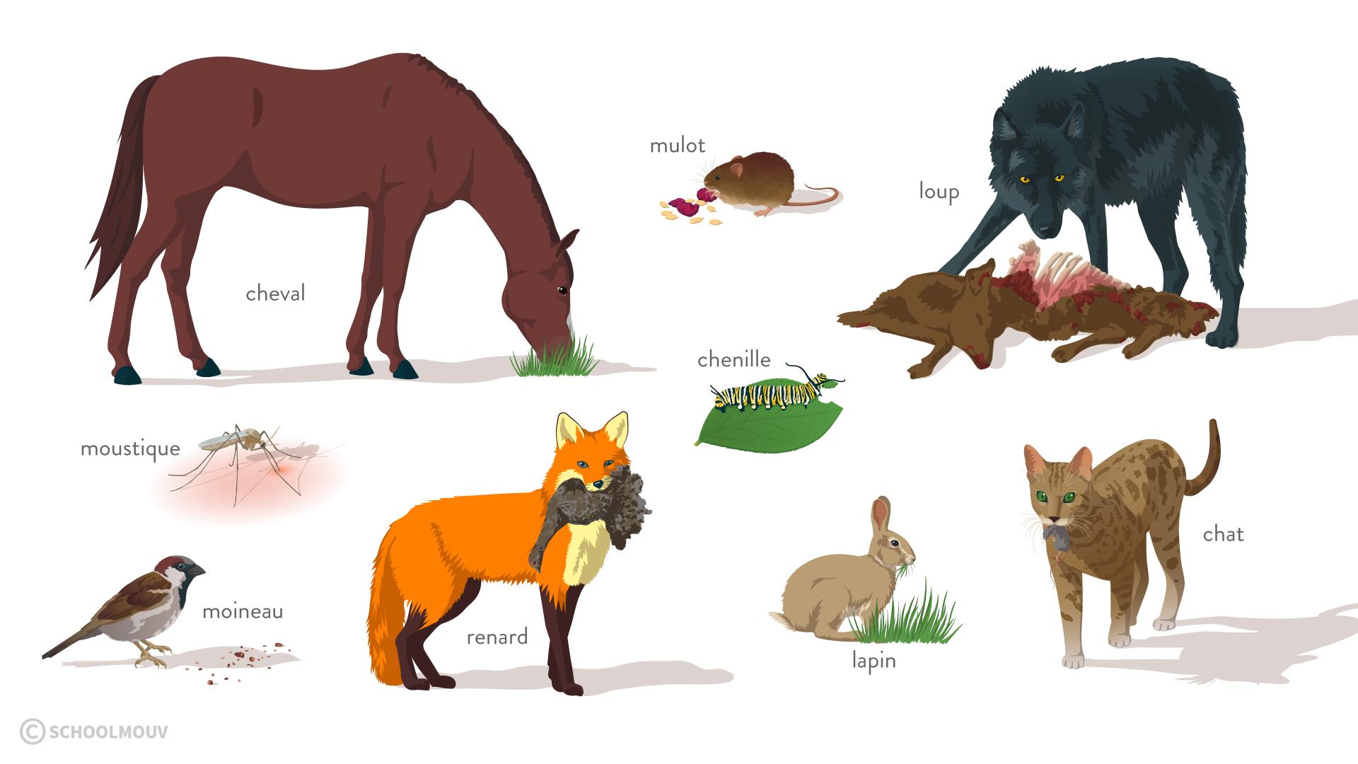 régime alimentaire animaux 6e