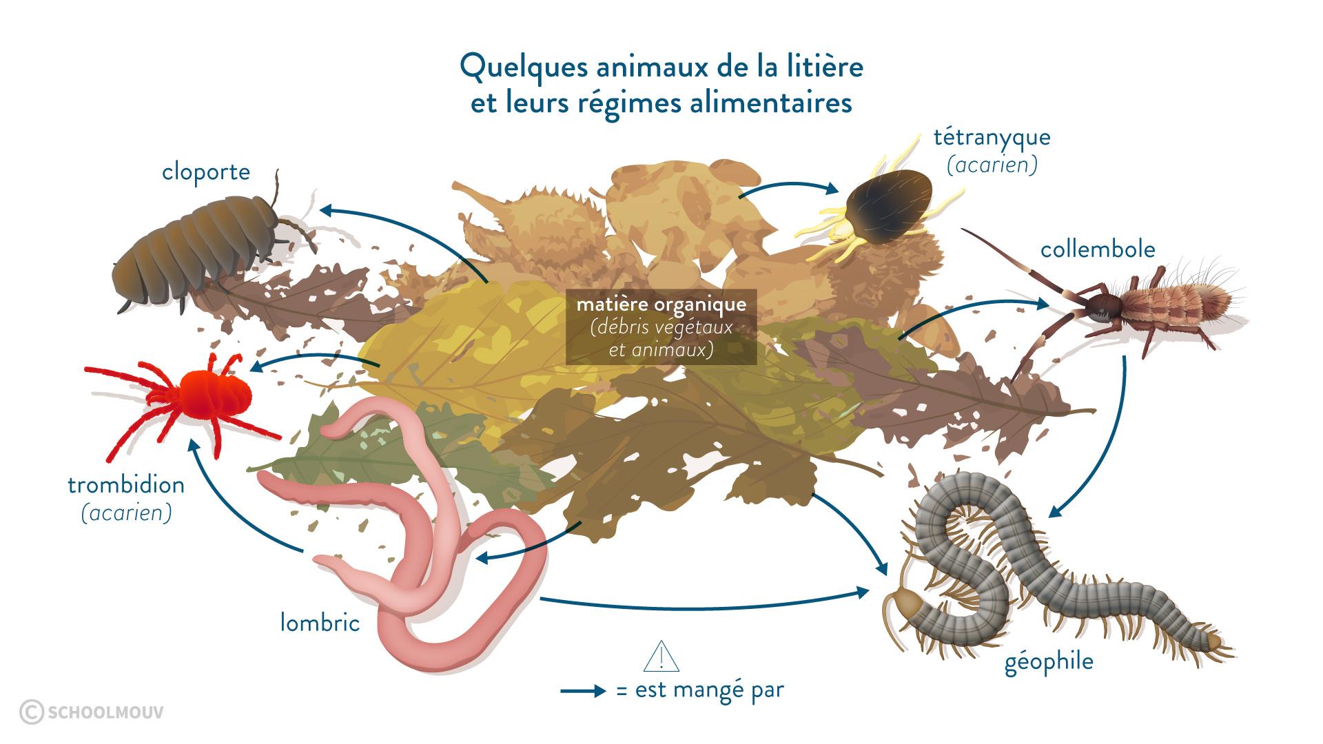 La transformation des déchets organiques : Fiche de cours - SVT