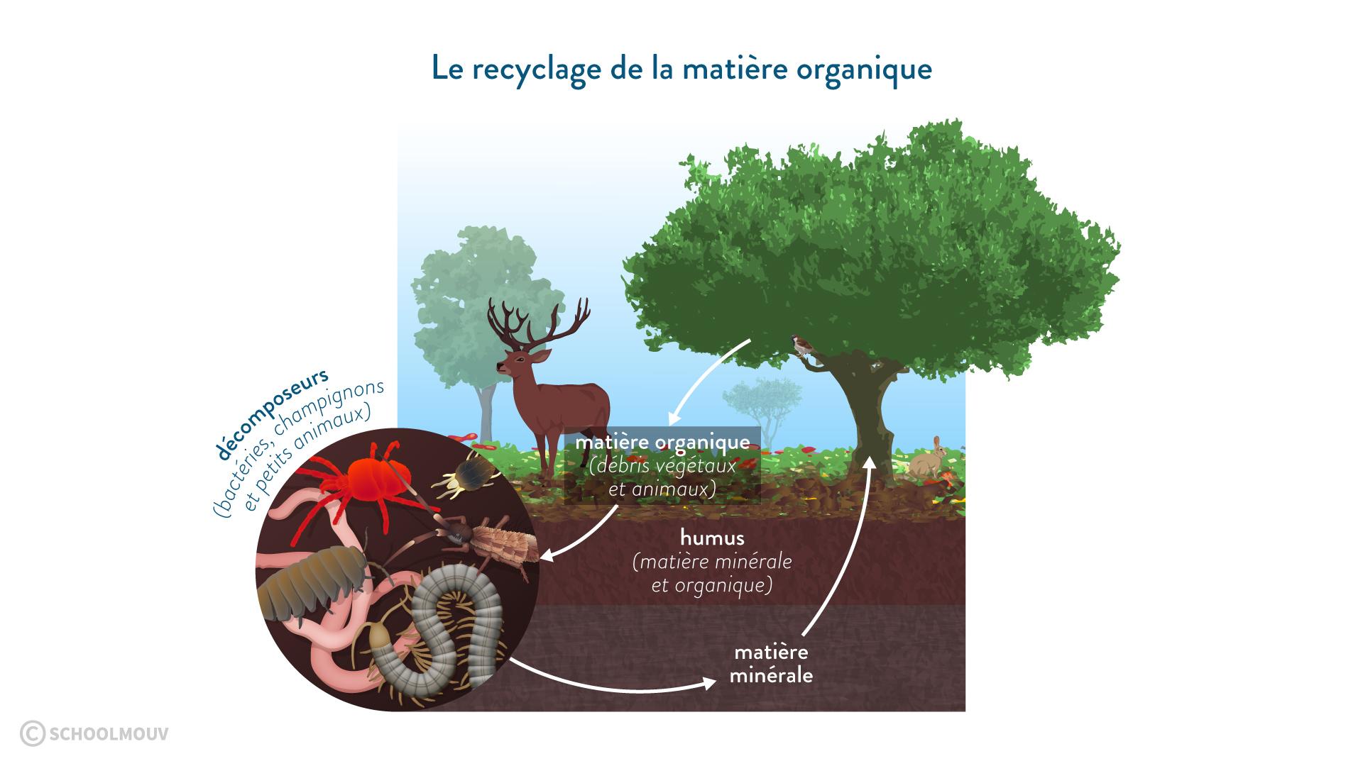 Le recyclage de la matière organique svt 6eme schoolmouv