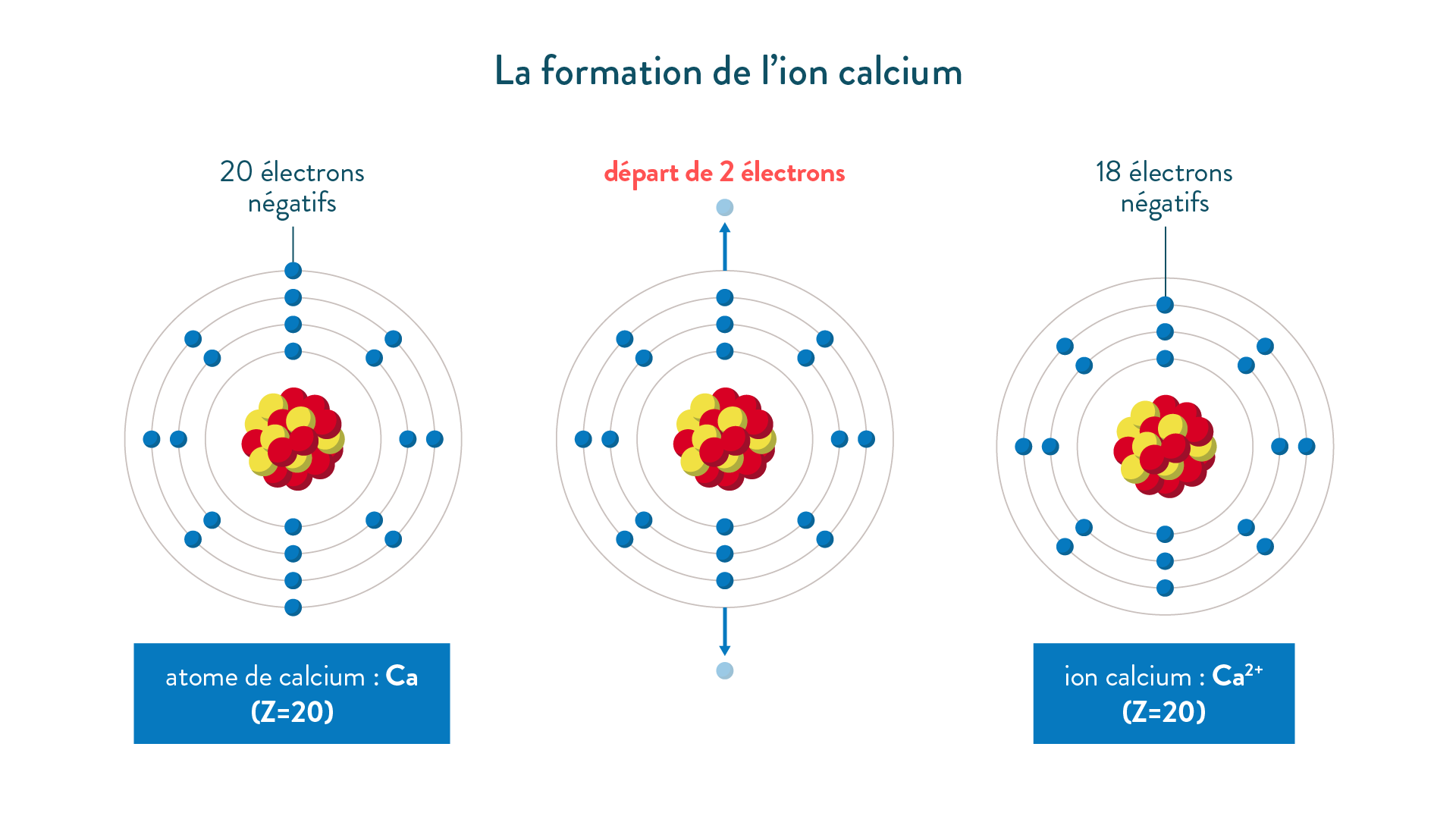 La formation de l'ion calcium