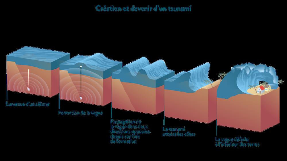 Création et devenir d'un tsunami