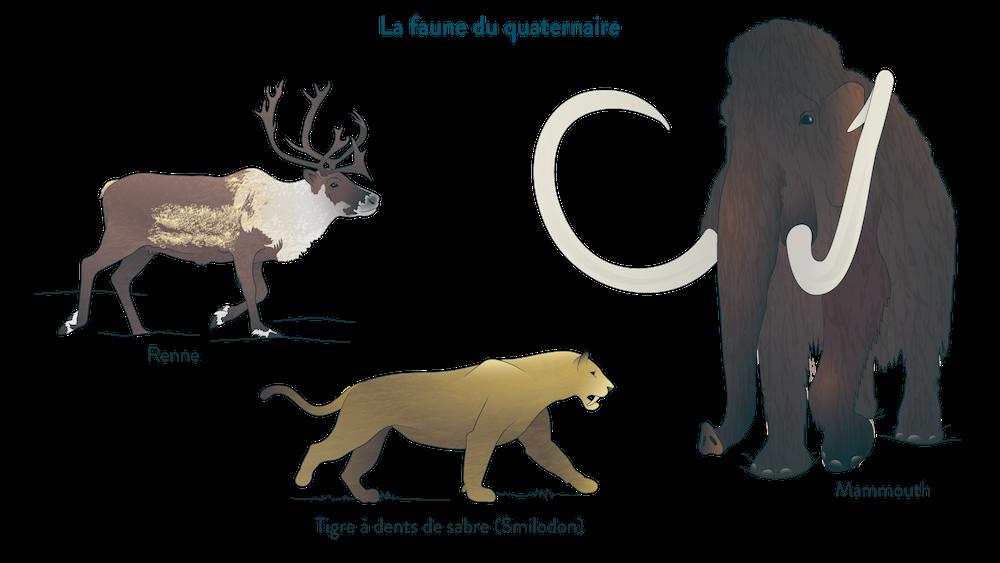 La faune au quaternaire