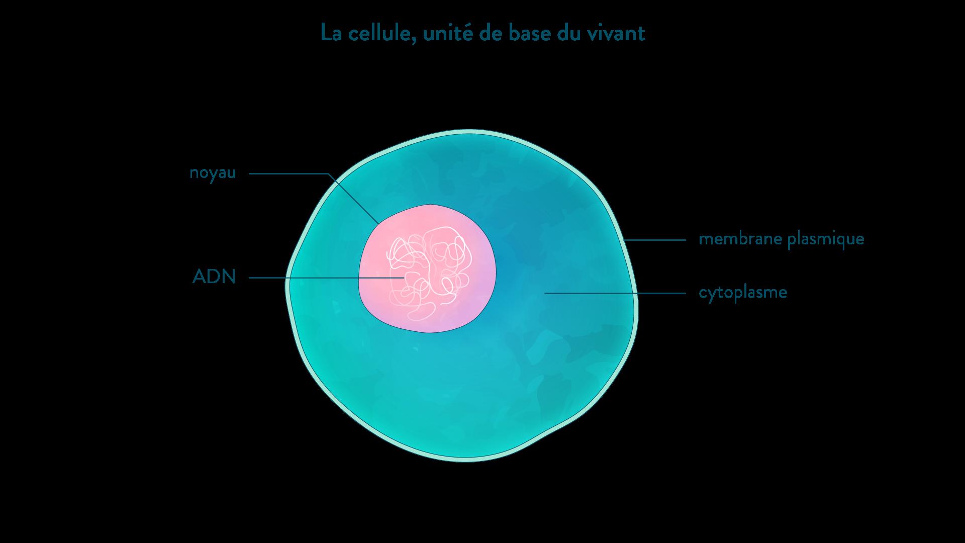 La cellule, unité de base du vivant