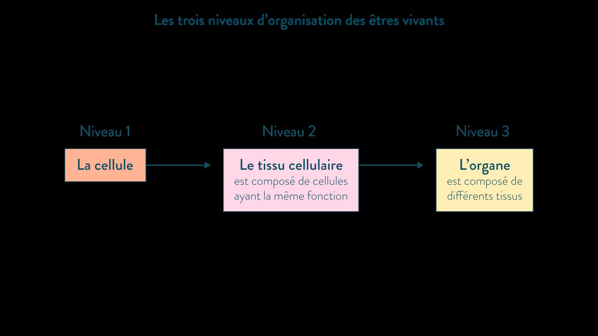 Les trois niveaux d'organisation des êtres vivants