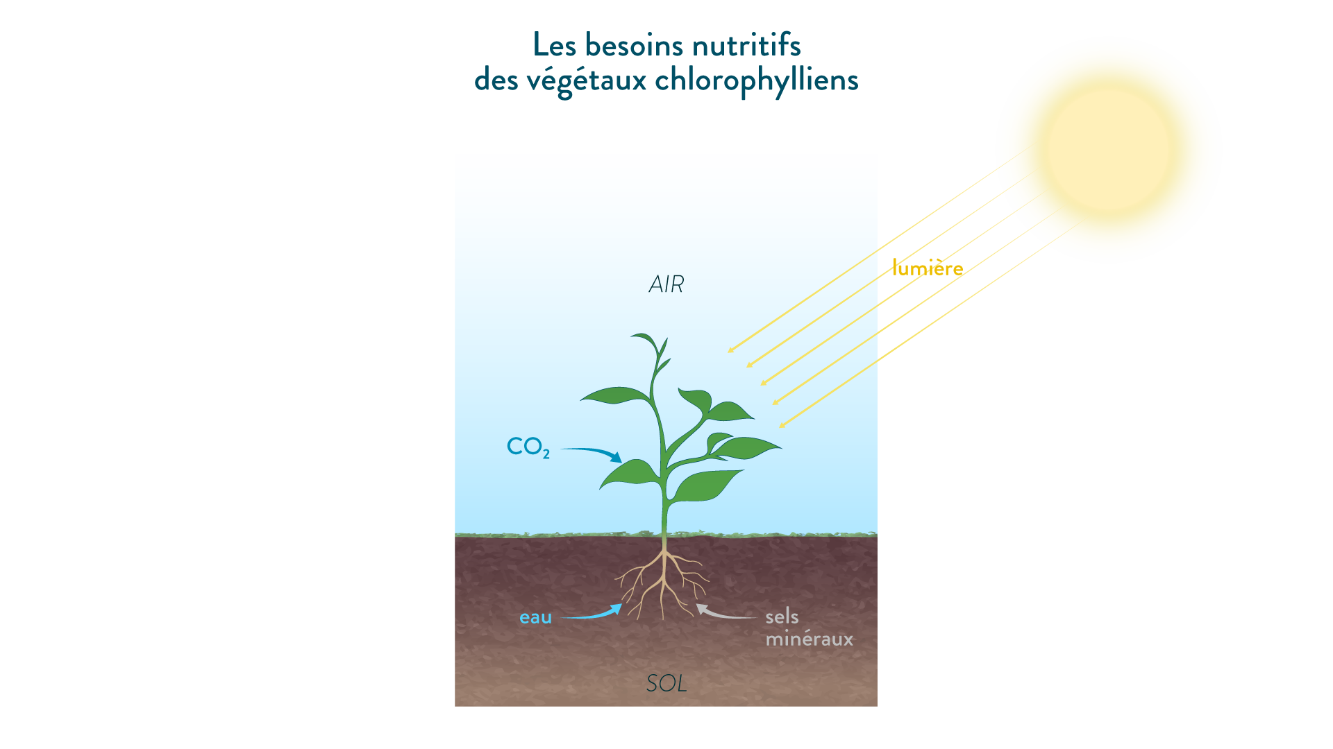 Les besoins nutritifs des végétaux chlorophylliens
