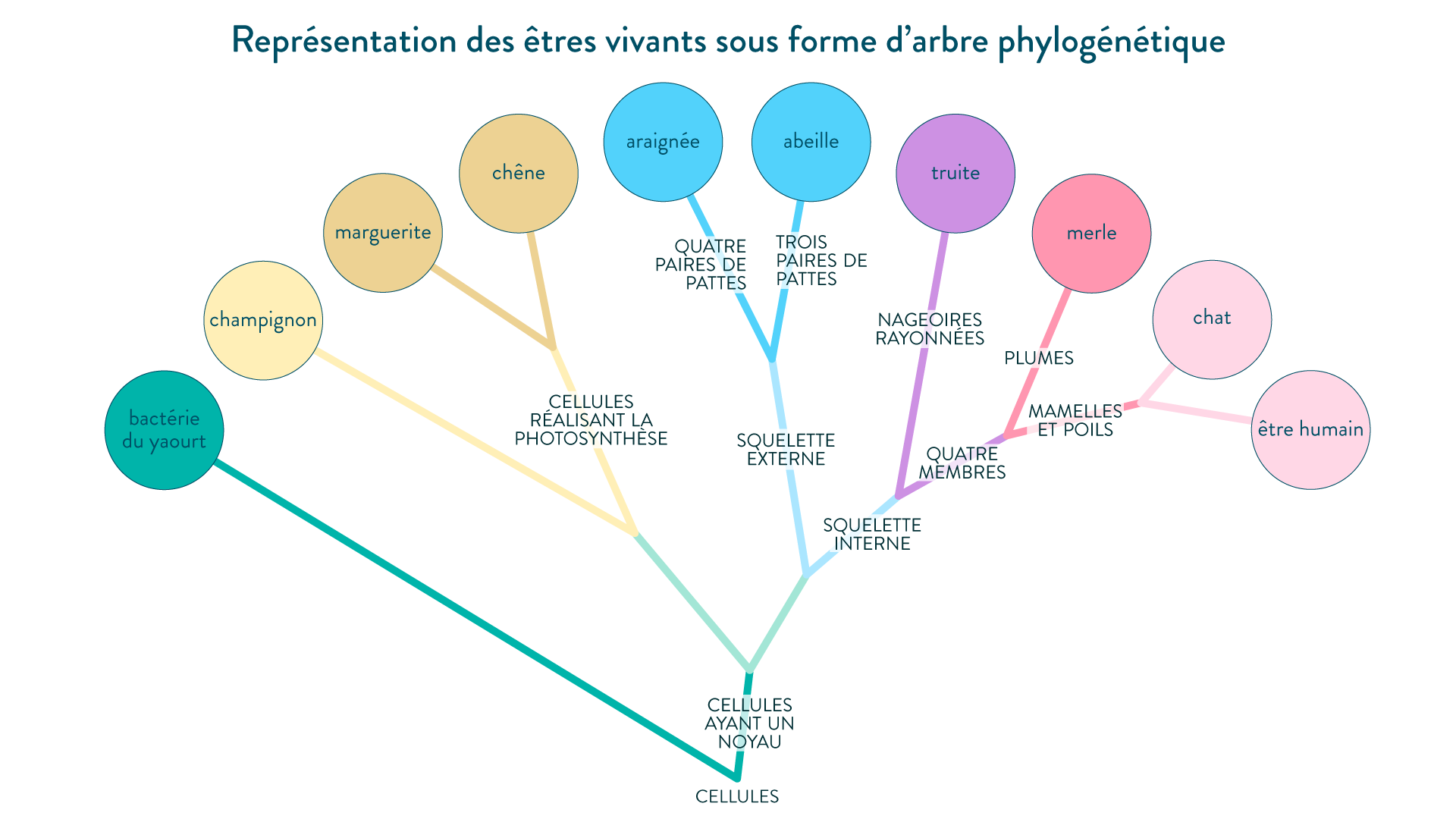 Représentation des familles d'êtres vivants sous forme d'arbre phylogénétique