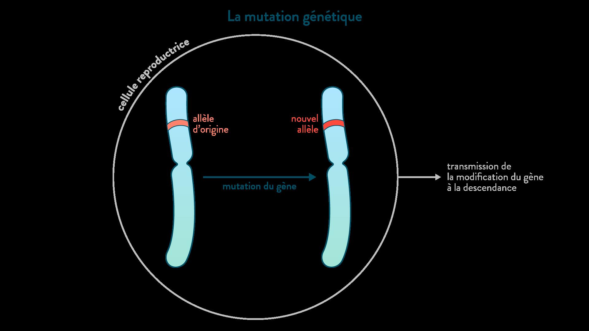 La mutation génétique