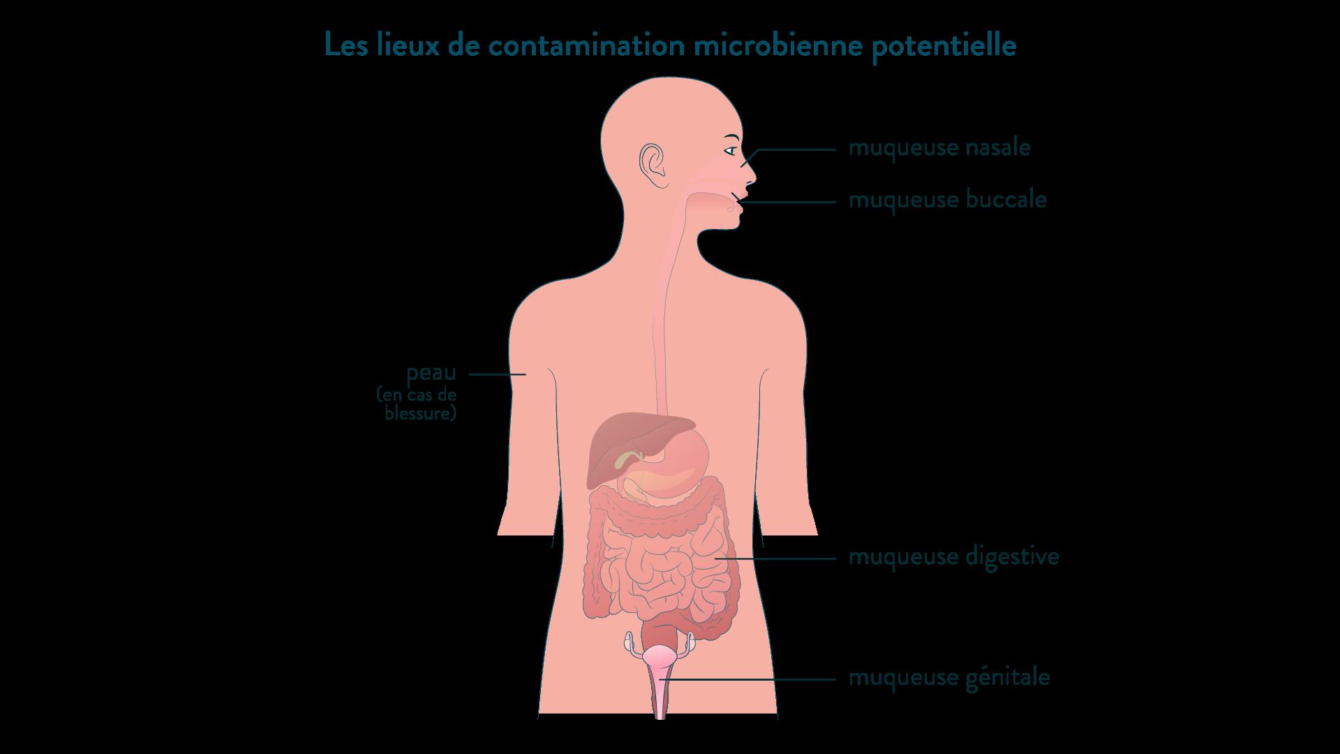 Les lieux de contamination microbienne potentielle
