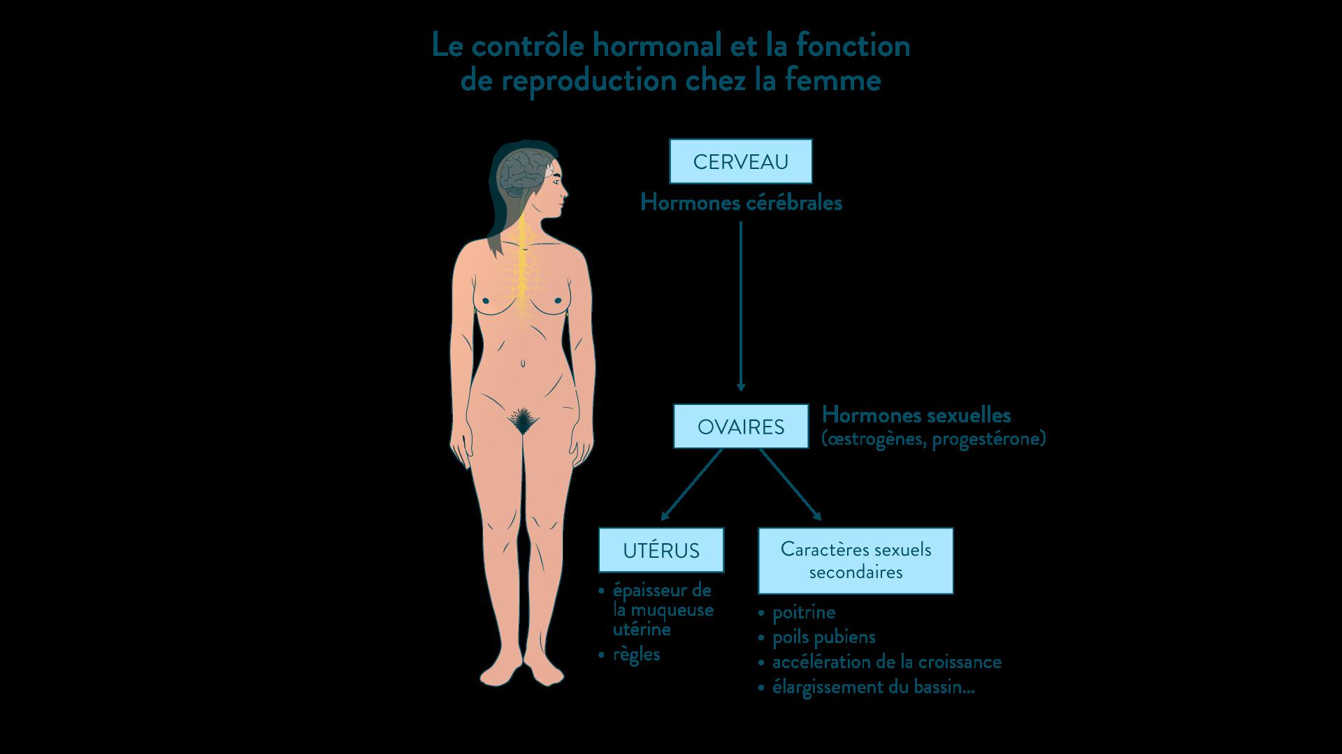 Le contrôle hormonal de la fonction de reproduction chez la femme