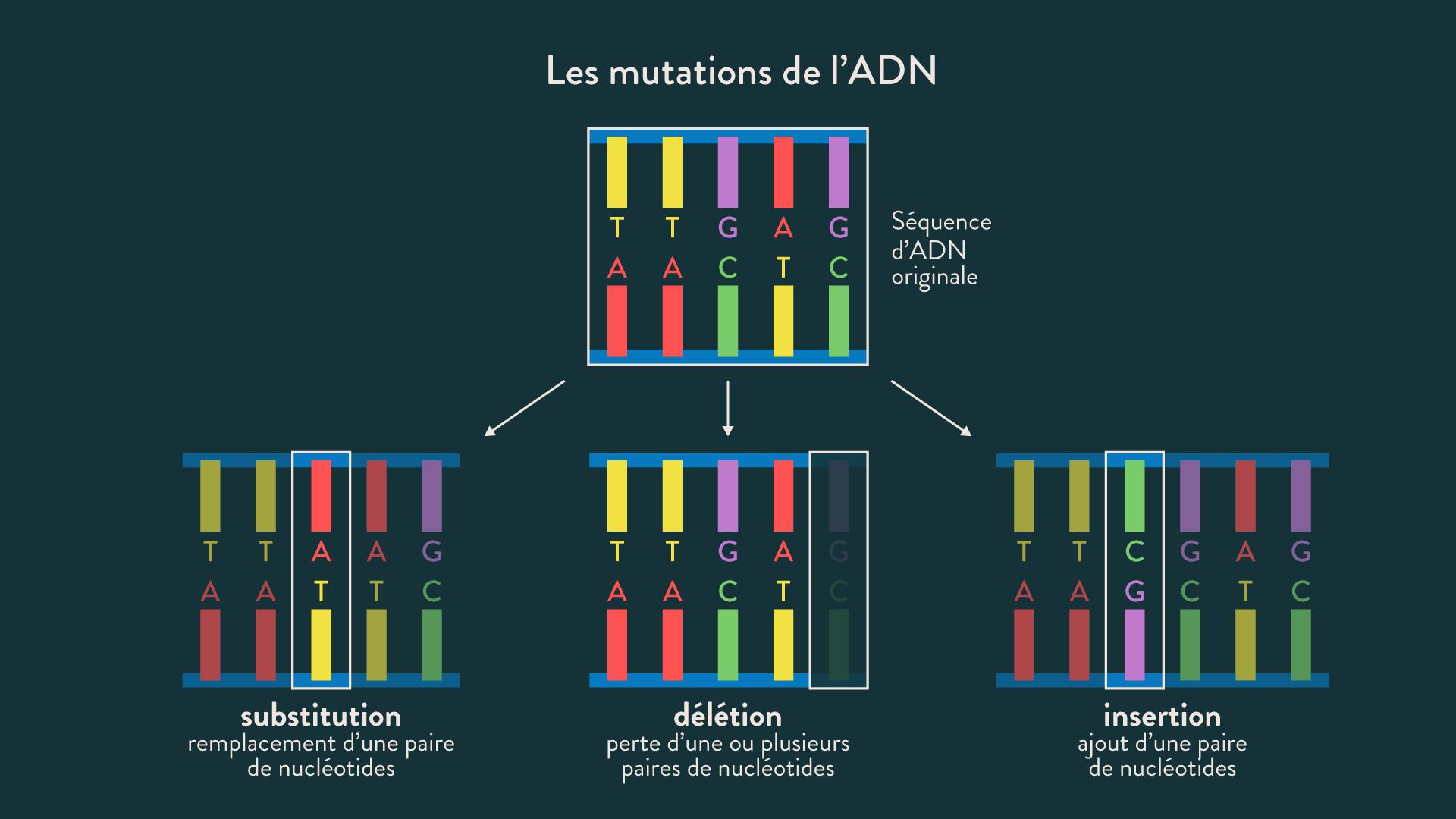 Les mutations de l'ADN