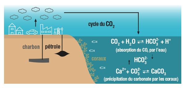 Processus  d'absorption du dioxyde de carbone par les océans physique-chimie terminale