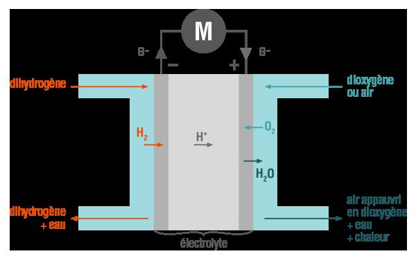 Pile à combustible physique-chimie terminale