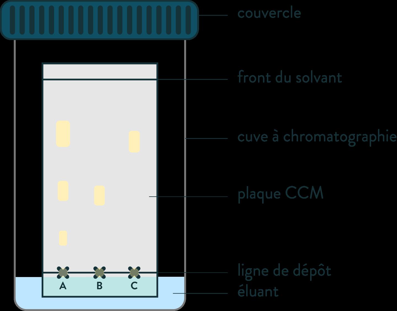 R aliser une chromatographie sur couche mince ccm schoolmouv - Chromatographie sur couche mince ...