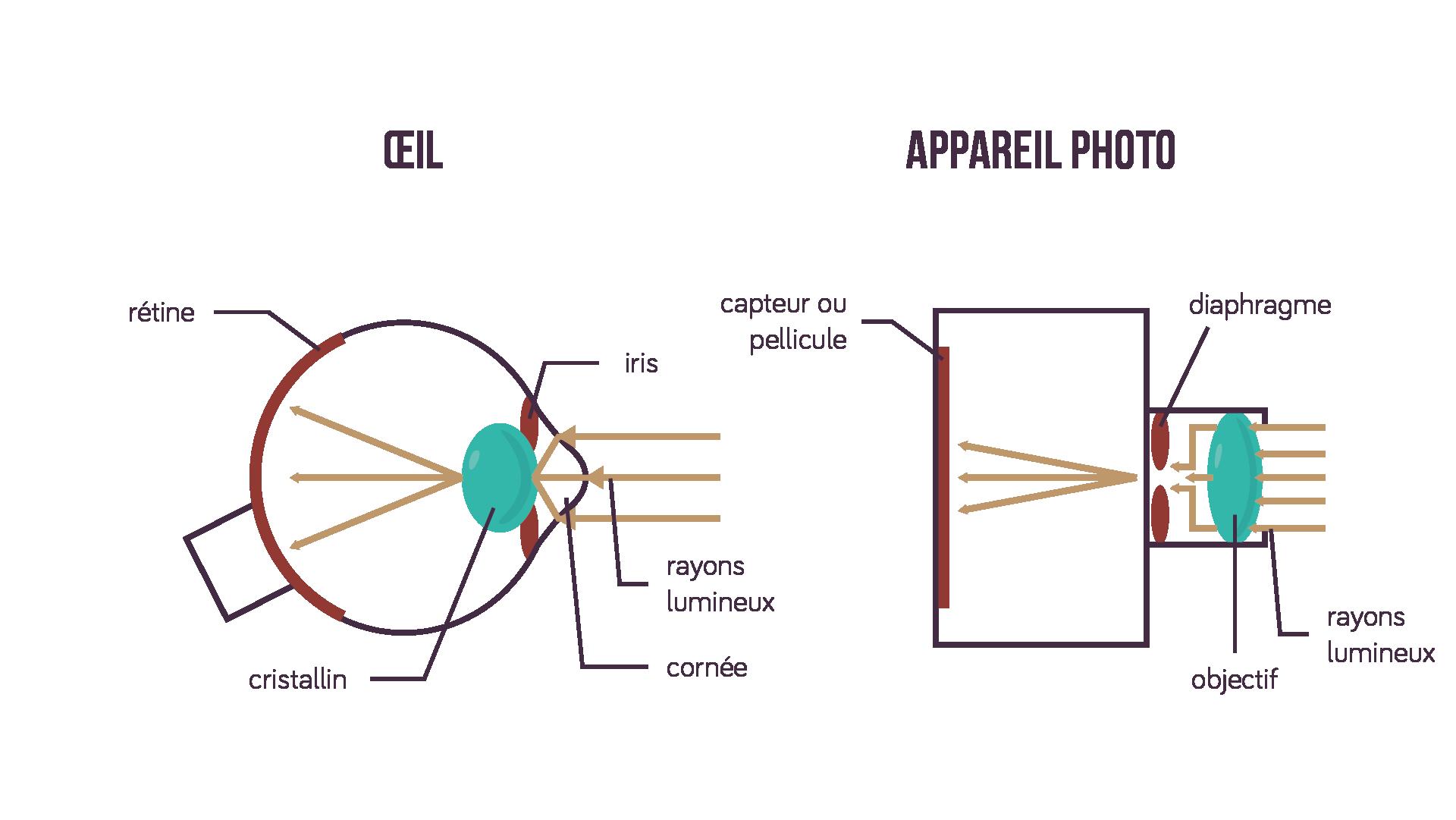 Comparatif de principes: l'œil humain et l'appareil photographique sciences première