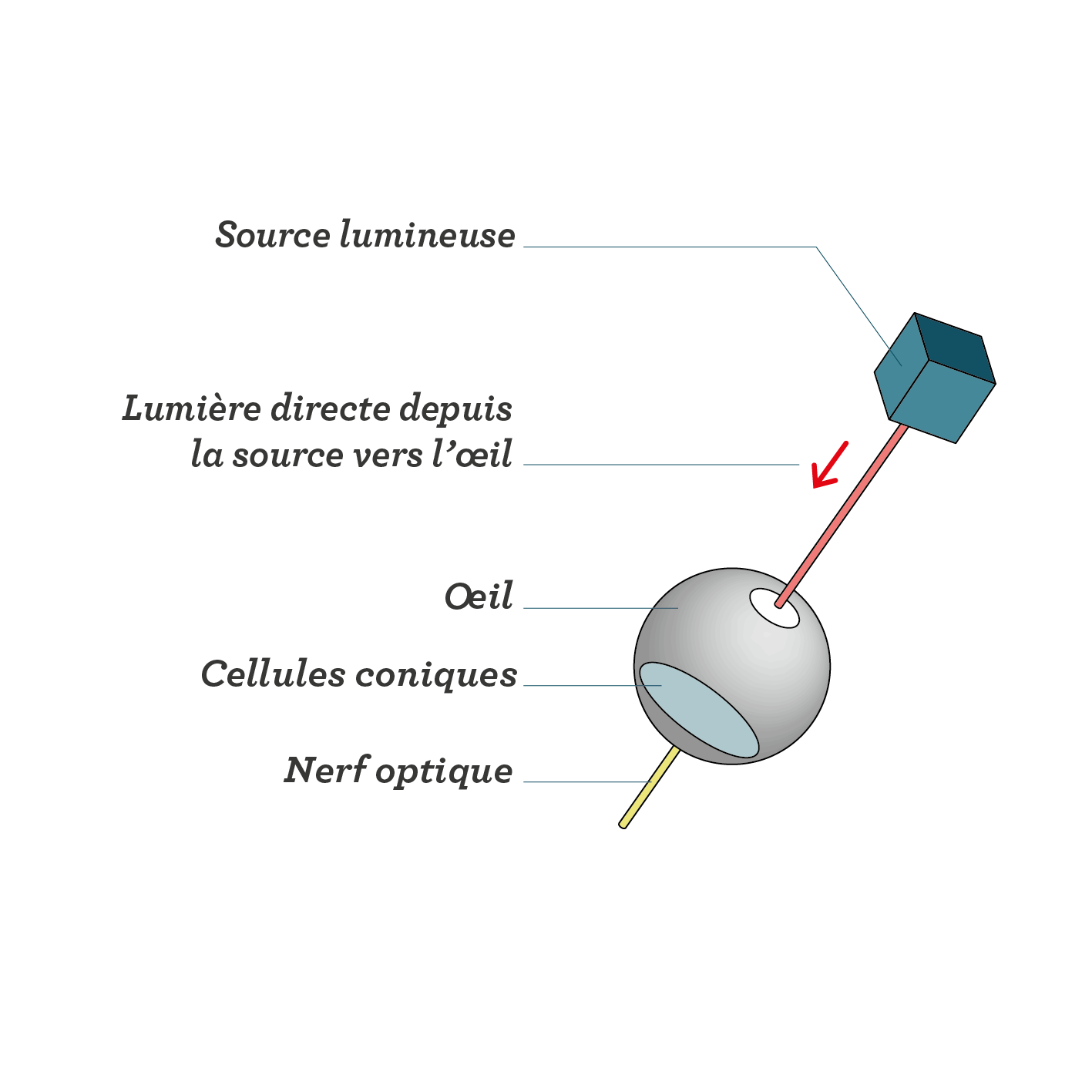 Trajet de la lumière entrant dans l'œil sans obstacle sciences première