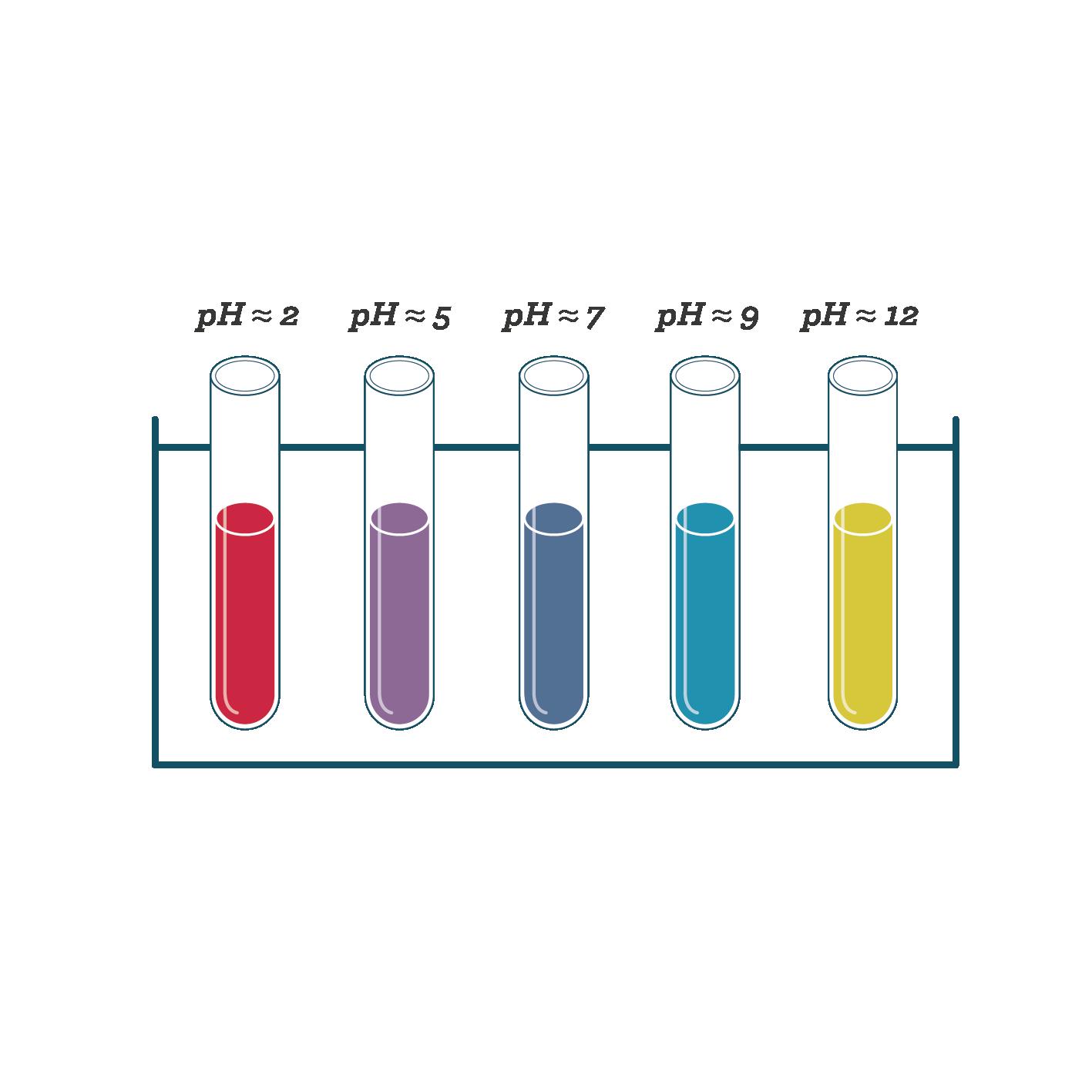 Couleur d'un extrait de chou rouge en fonction du pH du sol sciences première